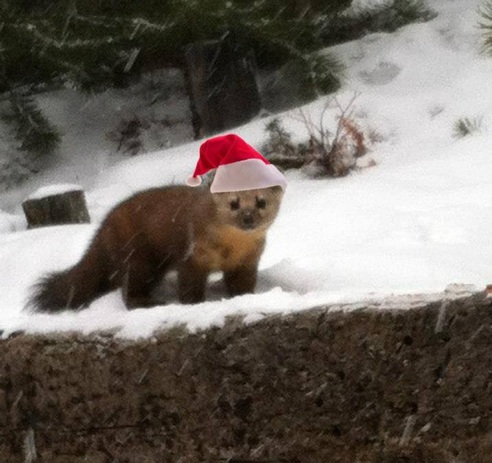 It's Christmastime in the Rockies!