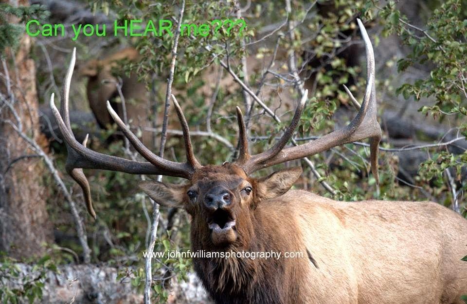 Elk bugling, Halloween Festivities, Hunting and More!
