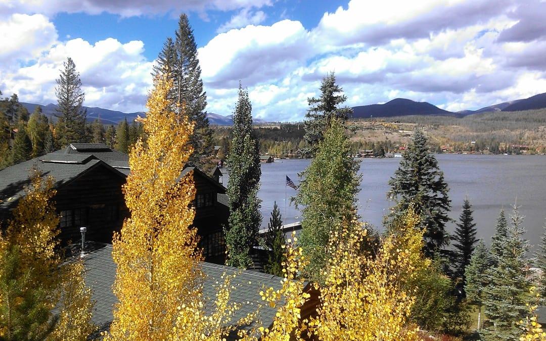 Bugling Elk and Golden Aspen Leaves